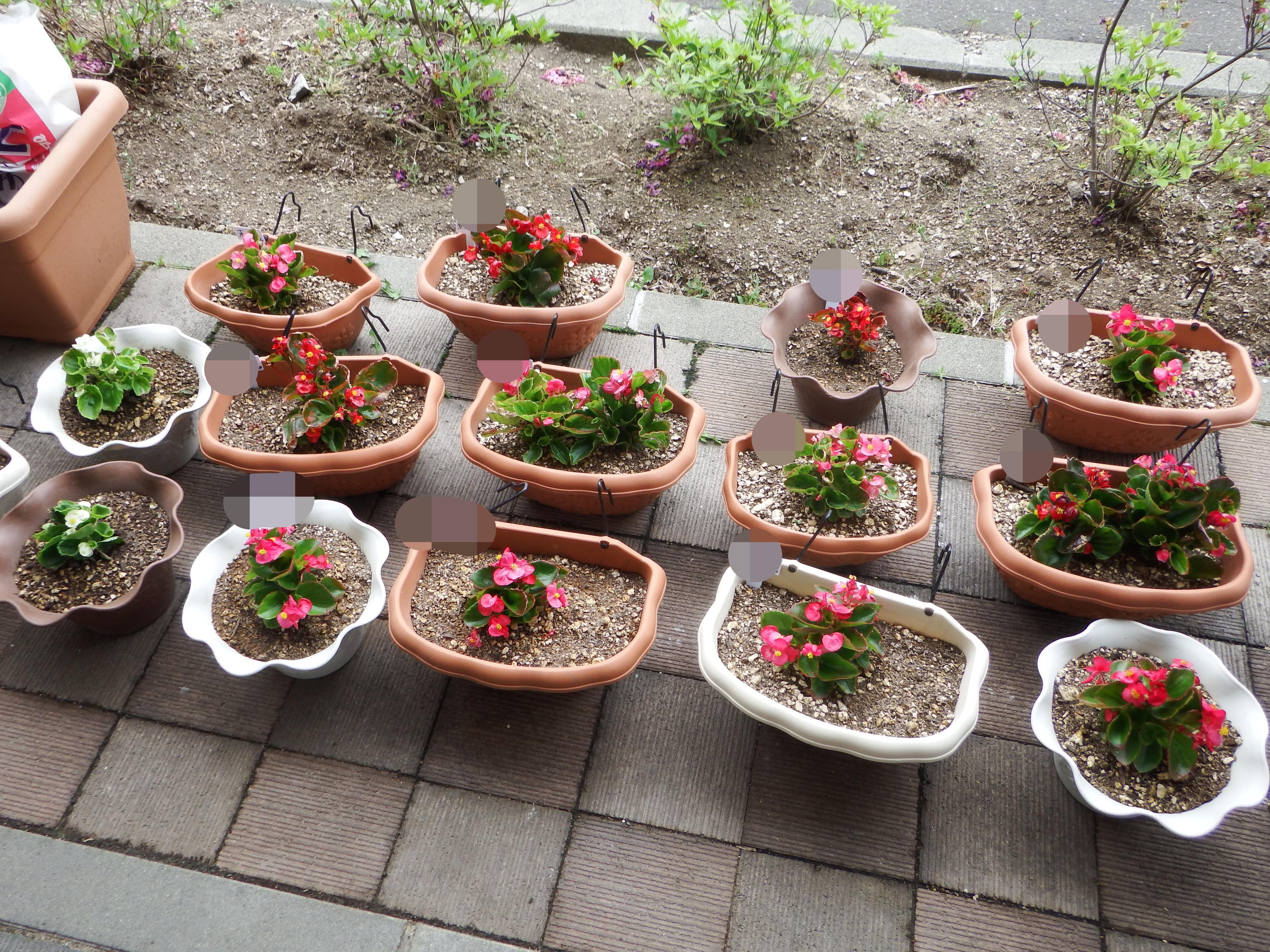 植えたお花たち.JPG